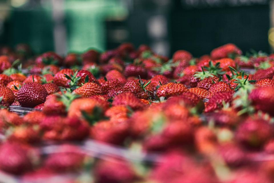 strawberry food crops