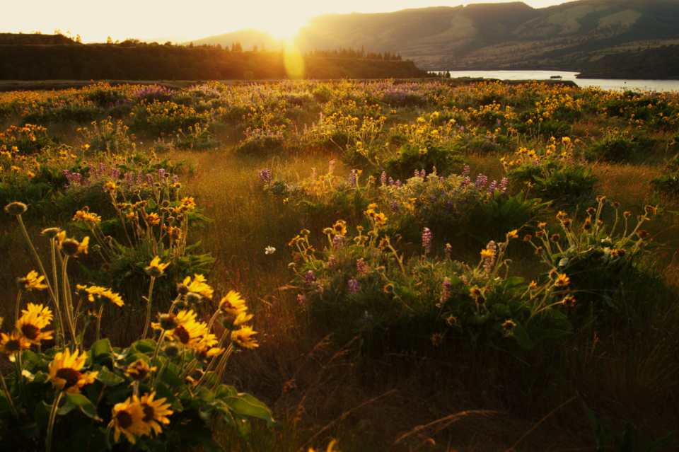 Free stock photo of summer meadow
