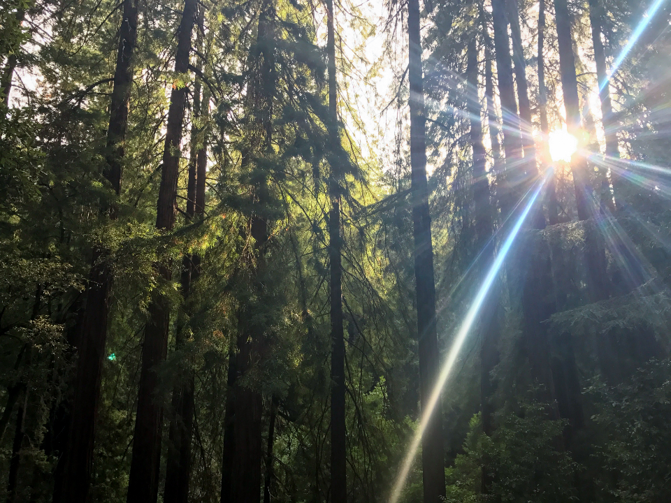 Free stock photo of sun forest