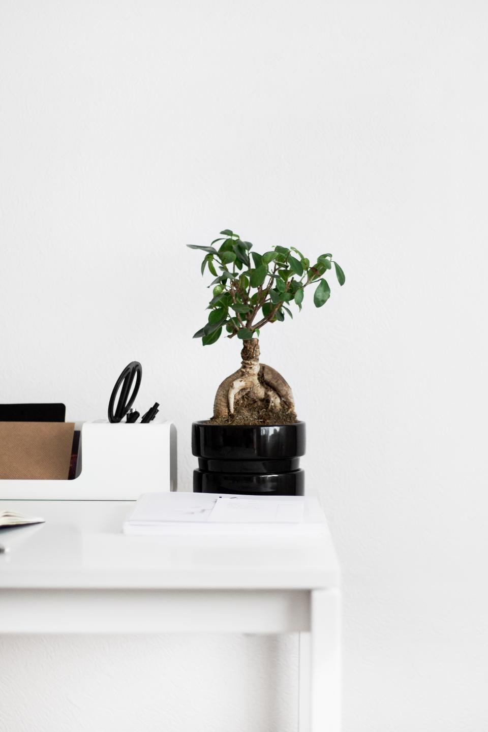 table notebook plant