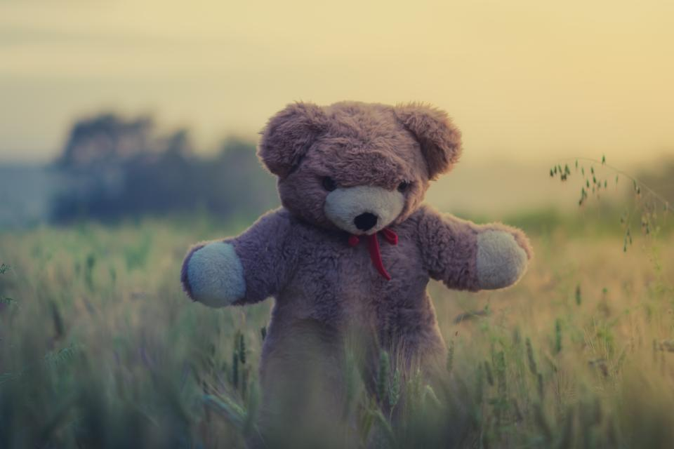 Free stock photo of teddy bear toy