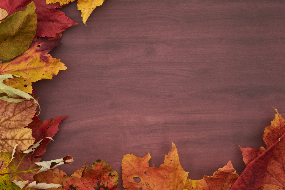 Free stock photo of thanksgiving background