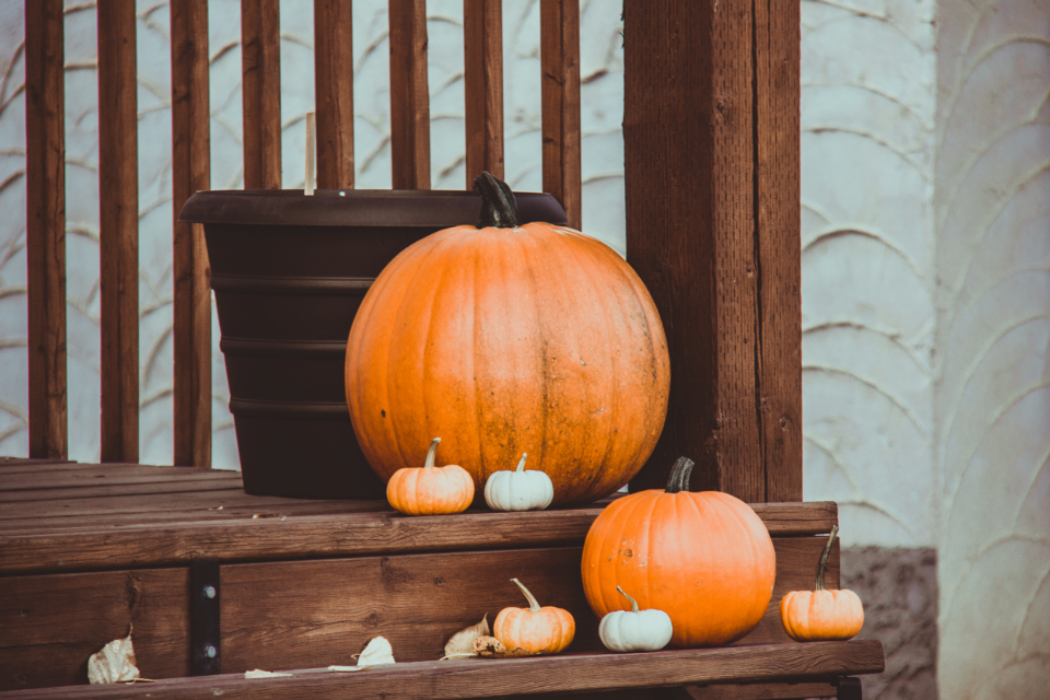 Free stock photo of thanksgiving fall