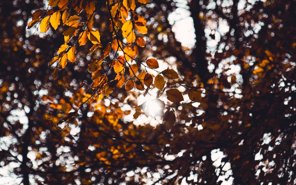 Free stock photo of tree leaves