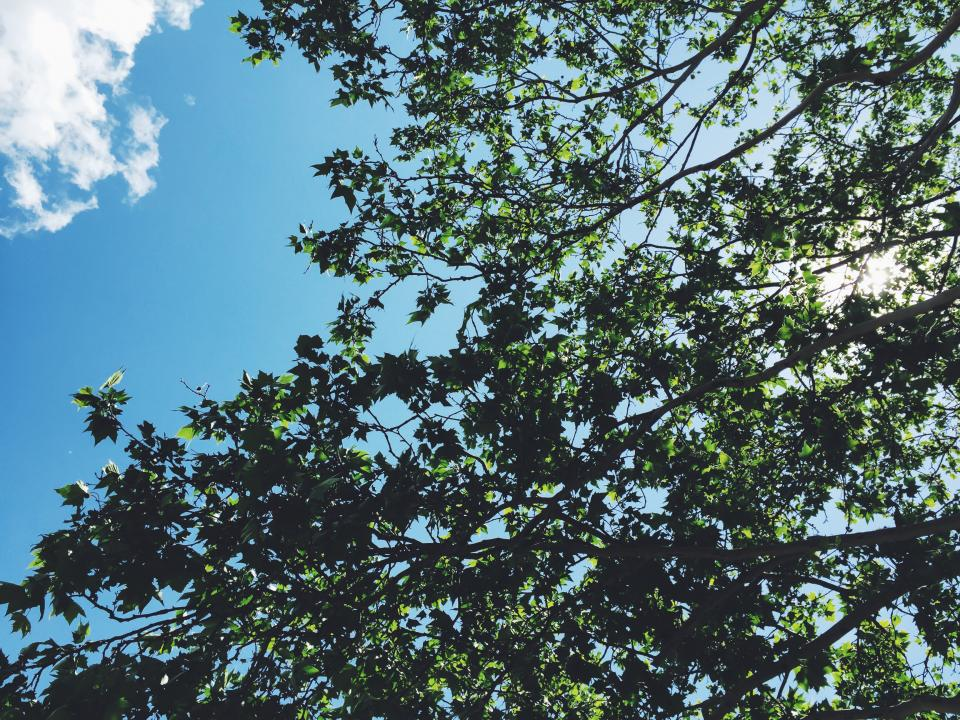trees branches leaves