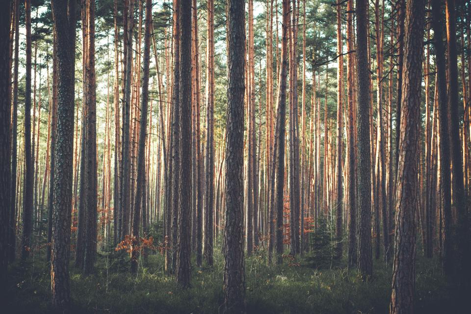 trees grass forest