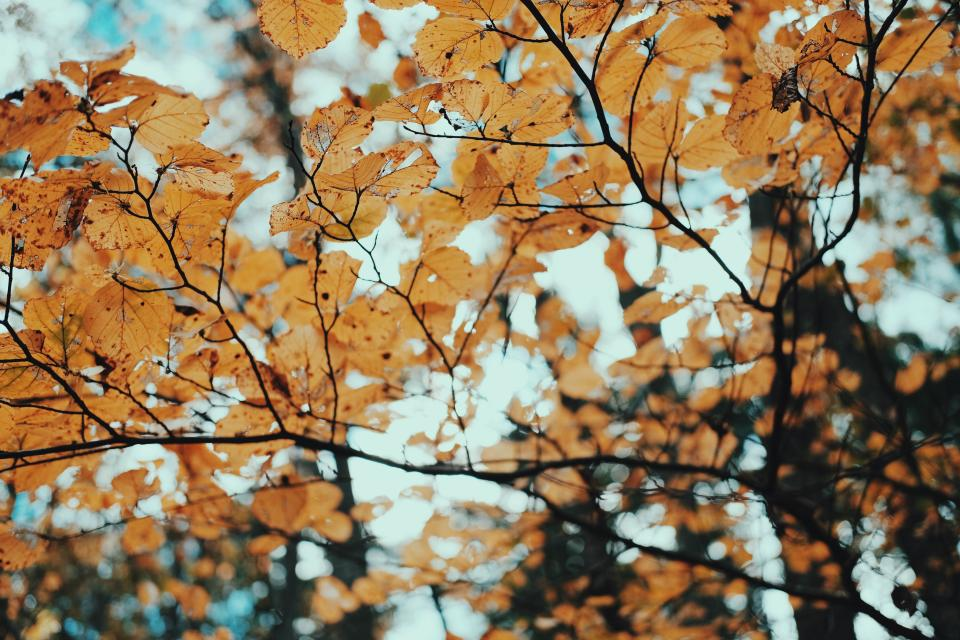 trees leaves dried