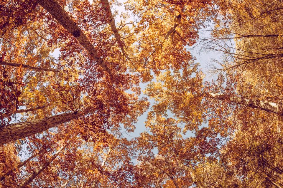 Free stock photo of trees leaves