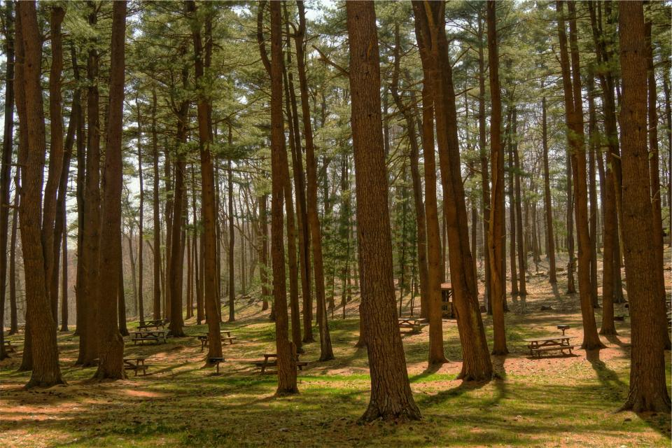 trees woods forest