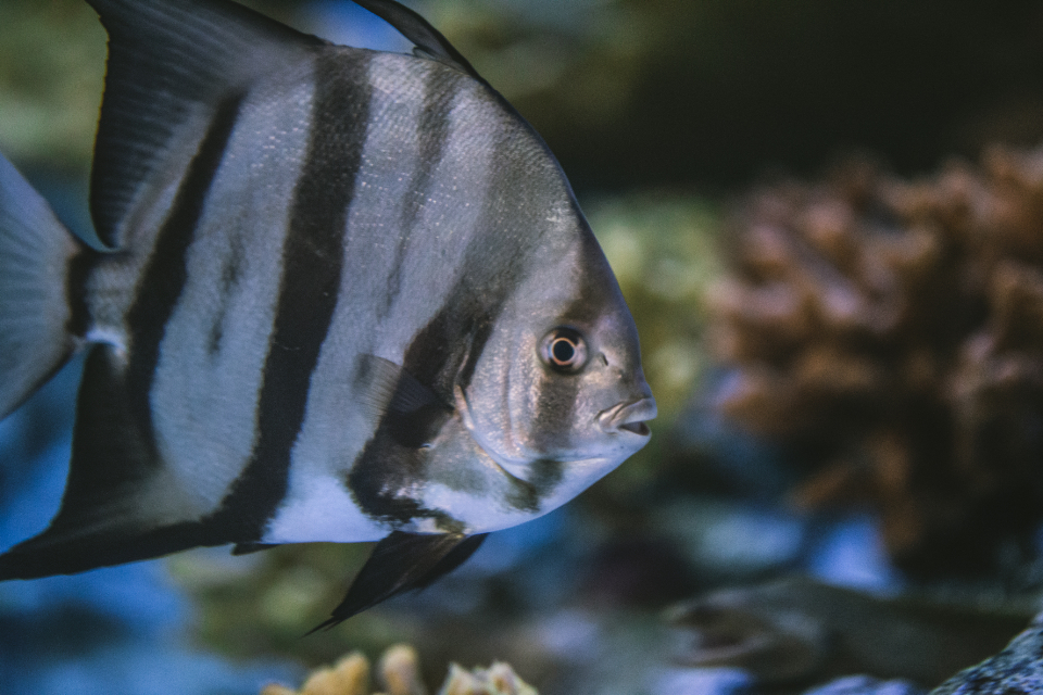 Free stock photo of tropical fish