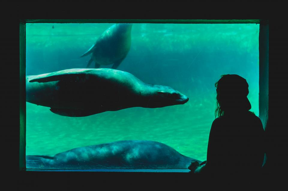 underwater aquarium sea lion