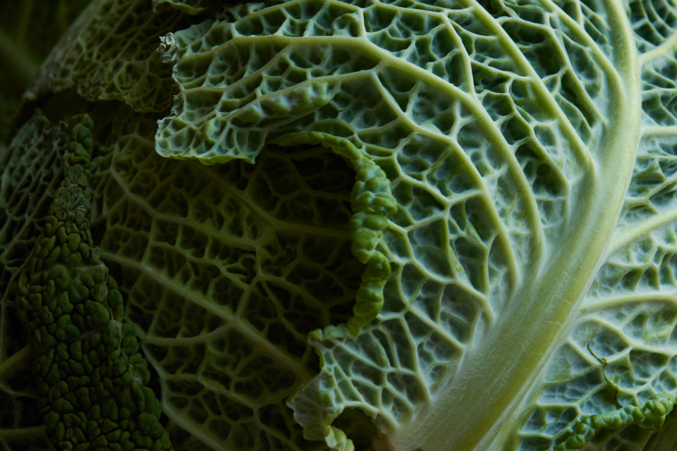 vegetable leaf macro