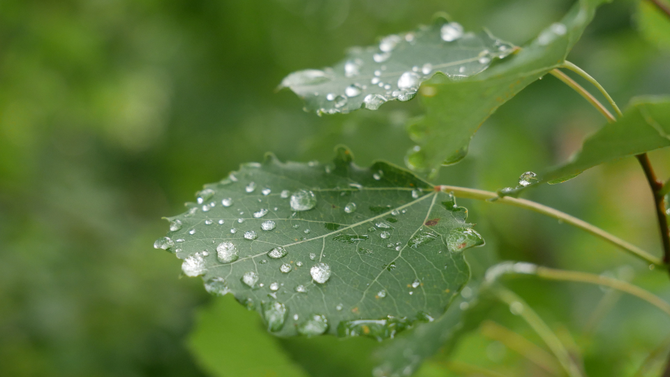 Free stock photo of wet leaves