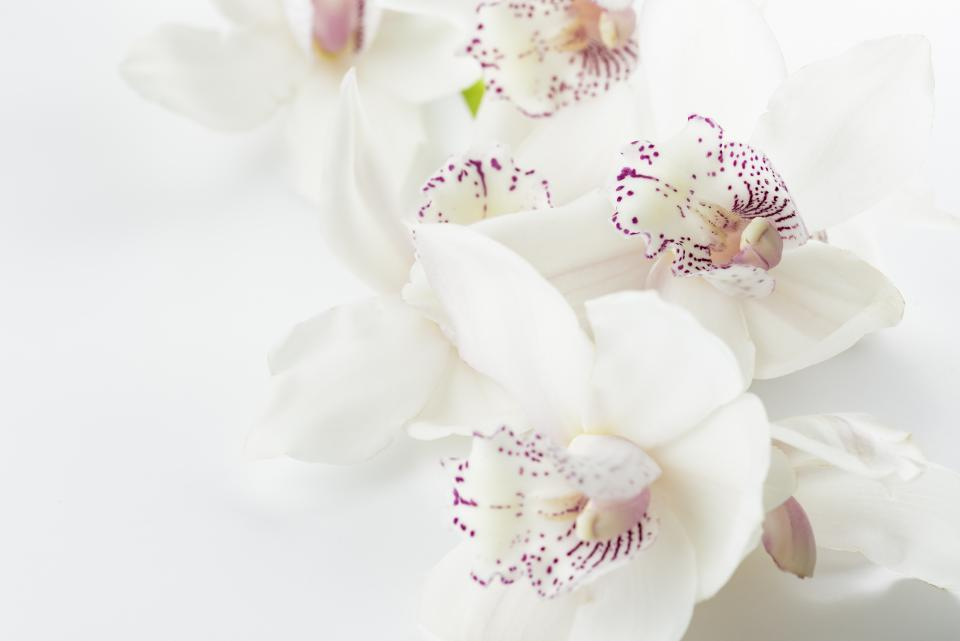 white blossoms flowers