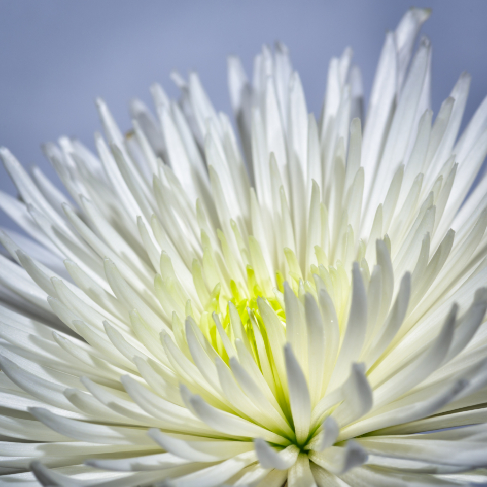 Free stock photo of white flower