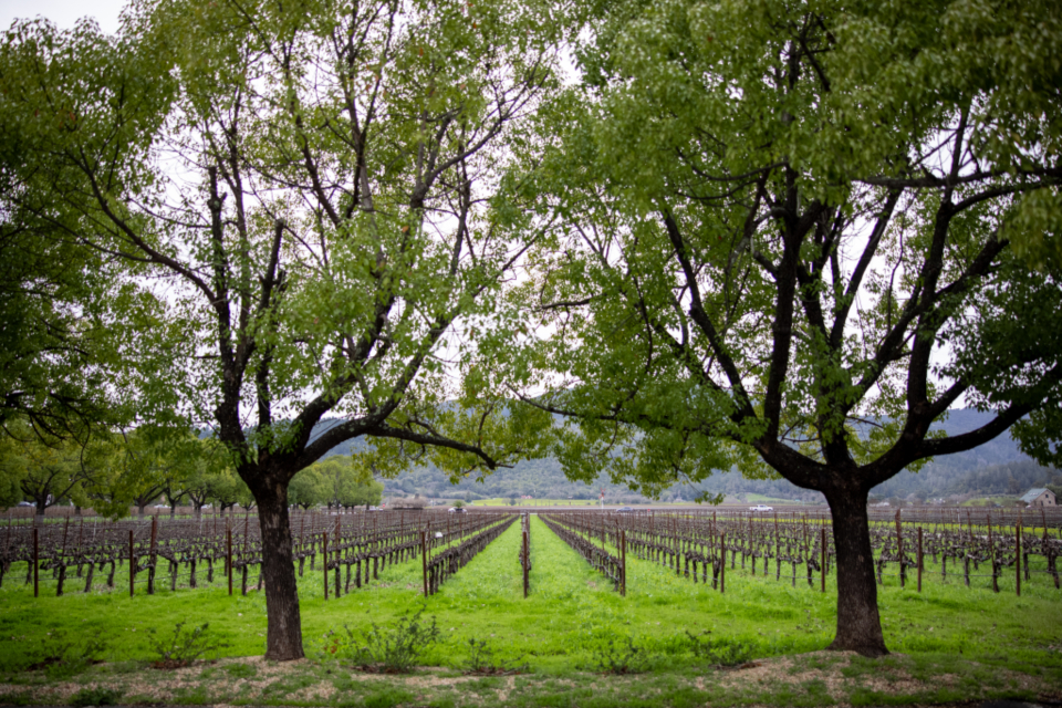 wine vineyard landscape
