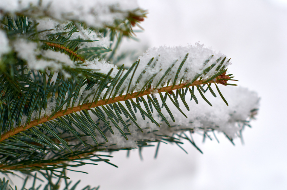 Free stock photo of winter background