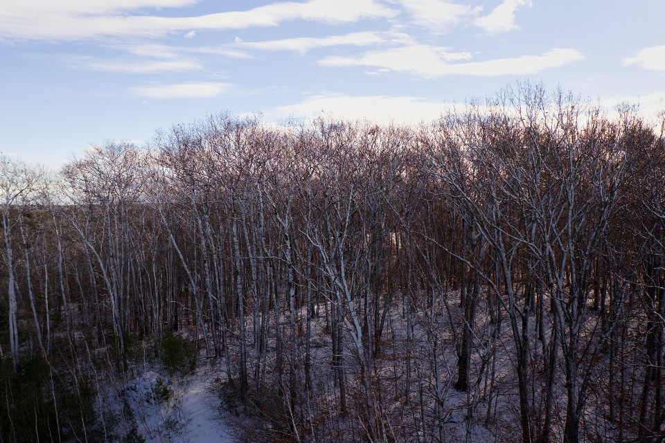 Free stock photo of winter forest