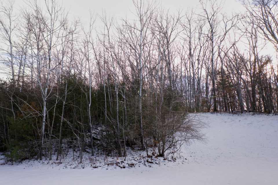 winter forest snow