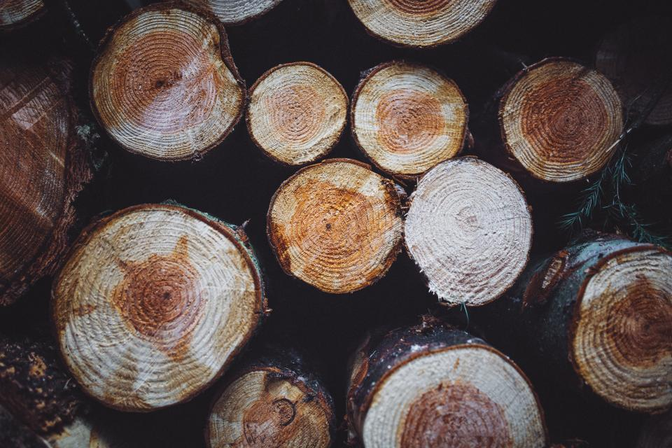 Free stock photo of woods logs