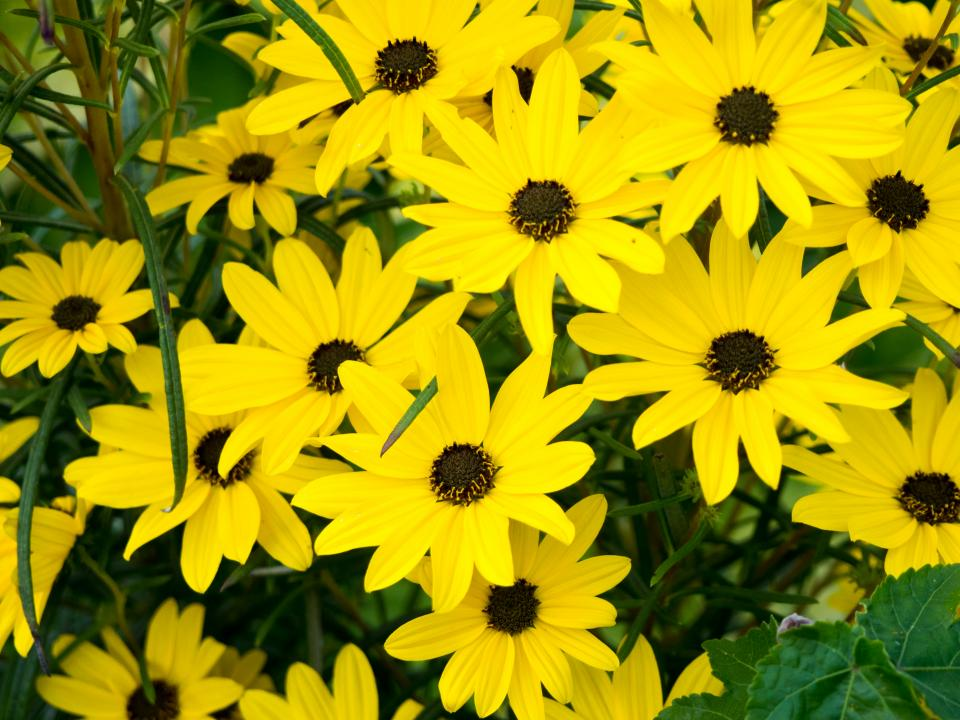 yellow petals flowers